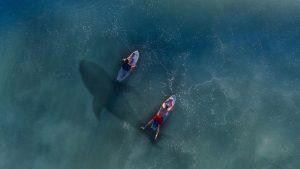 Dos surfistas y un tiburón que muestran los riesgos de la independencia financiera